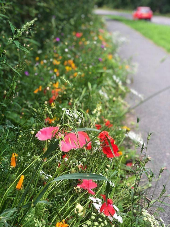 kettering council conservatives local pollinators environment green